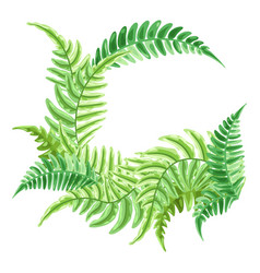 background with fern leaves vector image