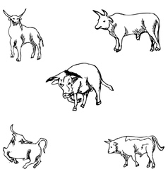 Bulls Sketch pencil Drawing by hand vector