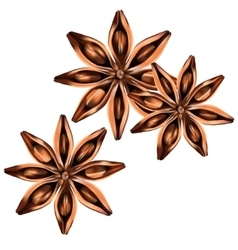 Stars of anise isolated on the white vector image