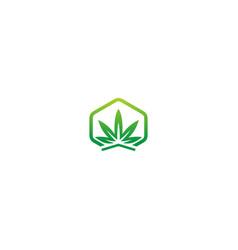 cannabis herb medic leaf logo vector image