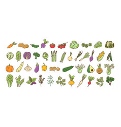 collection fresh ripe organic vegetables vector image