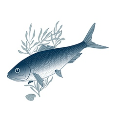 Fish herring vector