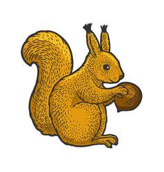 Squirrel and hazelnut sketch vector