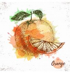 Watercolor orange sketch vector image