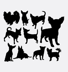 Chiwawa dog pet silhouette vector image vector image
