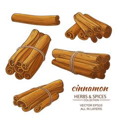 Cinnamon set vector