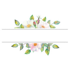Flowers white rose hips red fruits green vector
