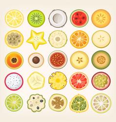 Fruit slices vector