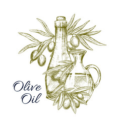 sketch poster of olives and olive oil vector image