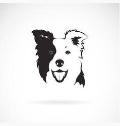 border collie dog on white background pet vector image