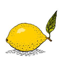 cartoon image of lemon vector image