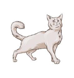 cute white cat pet animal hand drawn vector image