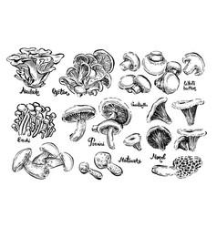 mushrooms white button morel champignon vector image