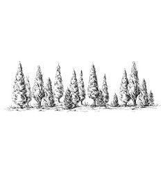 Panoramic view of the forest from cypress trees vector