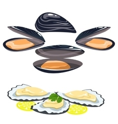 sea food shells of oysters mussels lemon and lime vector image