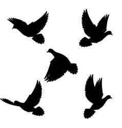 Set doves vector