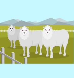 sheeps on the background of summer rural landscape vector image