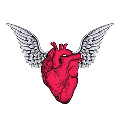 Hand drawn elegant red heart with wings sketch vector