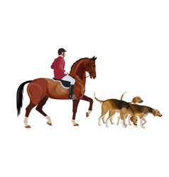 hunt master and pack hounds vector image