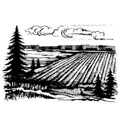 agricultural crops sketch vector image vector image