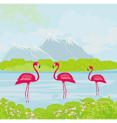 three pink flamingos in the water vector image