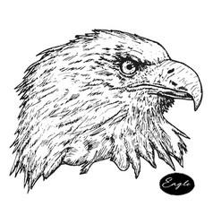 eagle - hand drawn isolated vector image