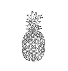 Ananas sketch vector