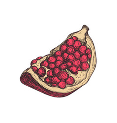 Pomegranate fruit hand drawn isolated icon vector