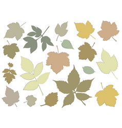 silhouettes different leaves vector image