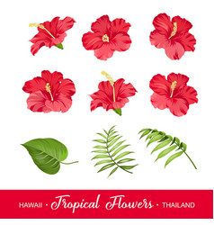 set of tropical flowers elements vector image