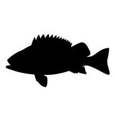 Black silhouette sea bass vector