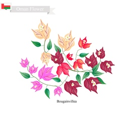 Bougainvillea Flowers The Native Flower of Oman vector image