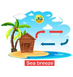 Diagram showing circulation sea breeze vector