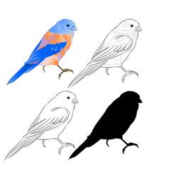 Thrush bluebird small bird a background vintage vector