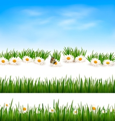 Collection of green grass backgrounds vector image vector image