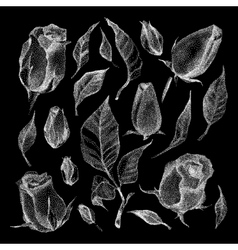 Roses Botanical set vector image