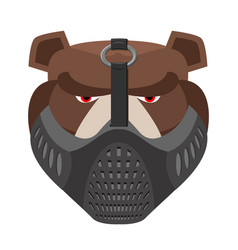 angry bear in protective mask aggressive grizzly vector image