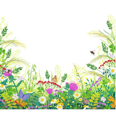 colorful frame with summer meadow plants and vector image