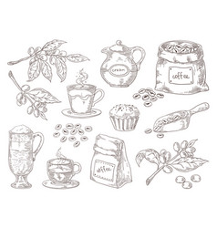hand drawn coffee beans vintage sketch coffee vector image