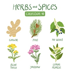 Herbs and spices collection 10 vector