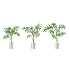 realistic detailed 3d potted green tropical palm vector image