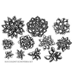 Set hand drawn black and white succulent vector