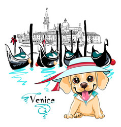 Cute puppy labrador in venice vector