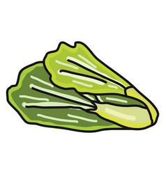 Green lettuce on white background vector
