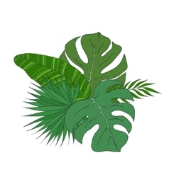 Set leaves different species palm trees vector