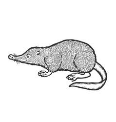 Russian desman animal sketch engraving vector