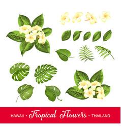 set tropical flowers elements vector image