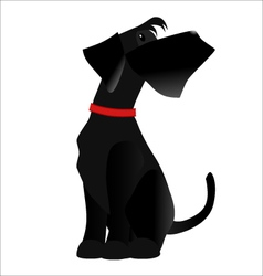 Dog breed Giant Schnauzer color black vector image vector image