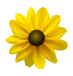 Black Eyed Susan vector