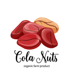 Cola nuts in cartoon style vector